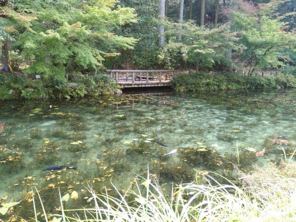 モネの池まで車で30分です ~町家ホテルbaison 名もなき池 板取川・岐阜県関市~
